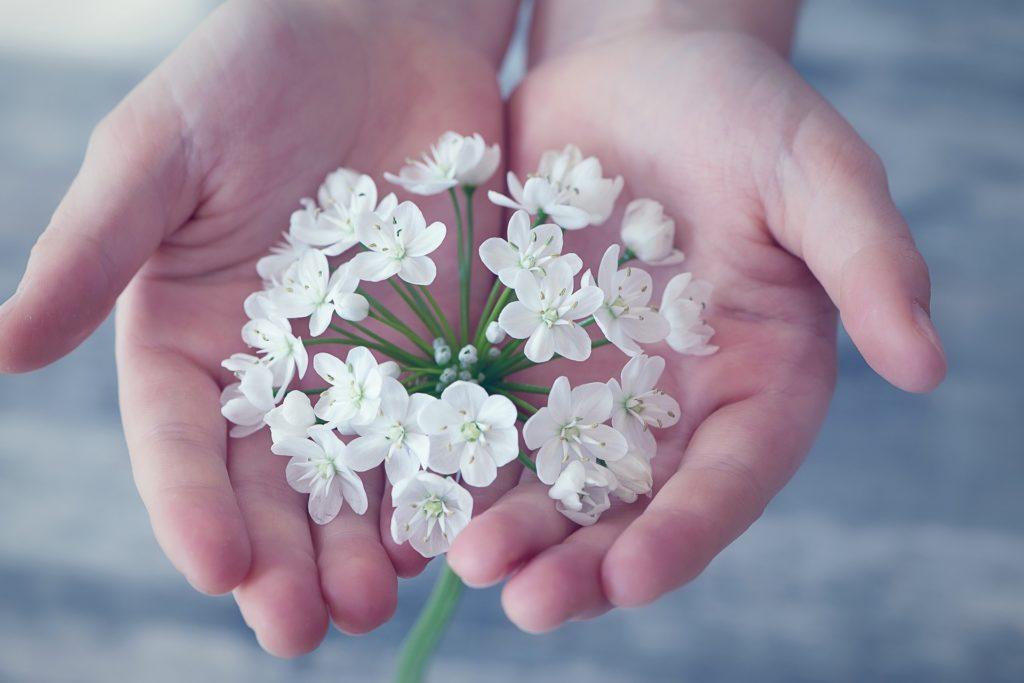 Blüten sammeln macht aufmerksam, auf aales, was draußen wächst.