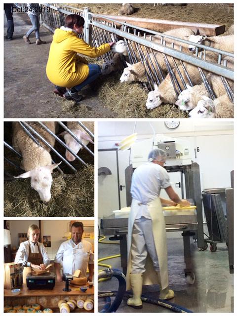 Texel – Käseherstellung