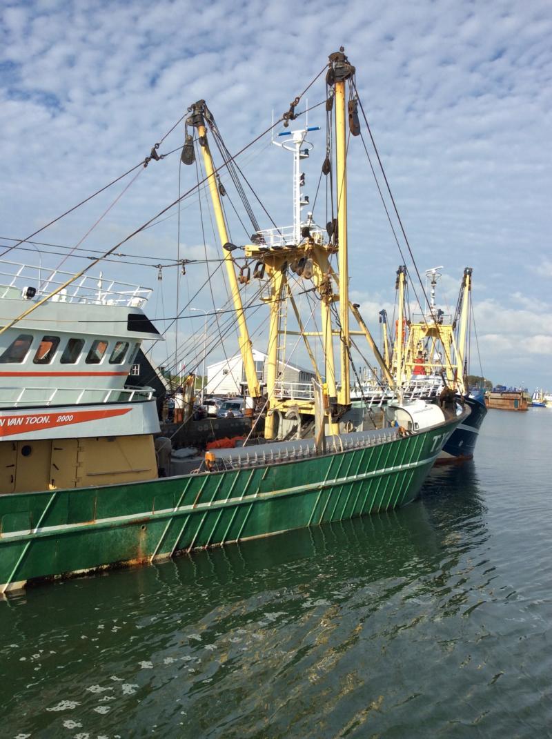 Texel – Krabbenfischer