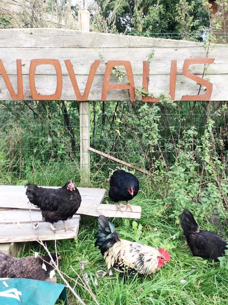 Texel – Novalishoeve