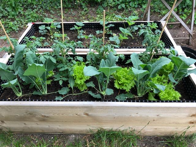 Gärtnern mit Kindern - Hochbeet